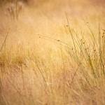 wallpaper_field