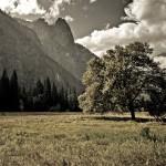 wallpaper_tree