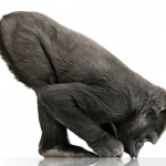 Nexus Galaxy nebude obsahovat Gorilla Glass