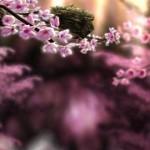 Spring Zen HD – 3D live pozadí