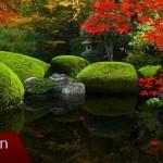 Živá tapeta: Zen Garden – Fall