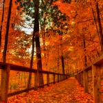Pozadí pro Android : Barvy podzimu