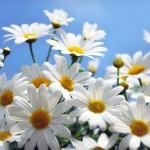 TOP 10 nejstahovanějších květinových pozadí